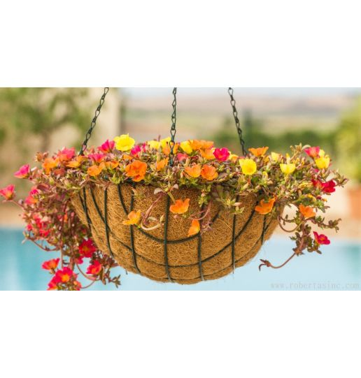 Hanging Baskets with Wire Chain and Coco Fiber Liner 2 PAK