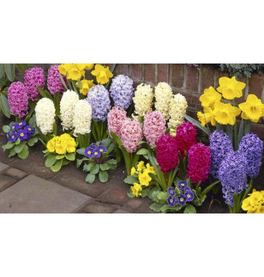 Sweet Smelling Hyacinth Collection - 18 pc. Set